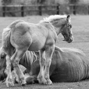 paard (Copyrights Marc Thomé Photography 2020)